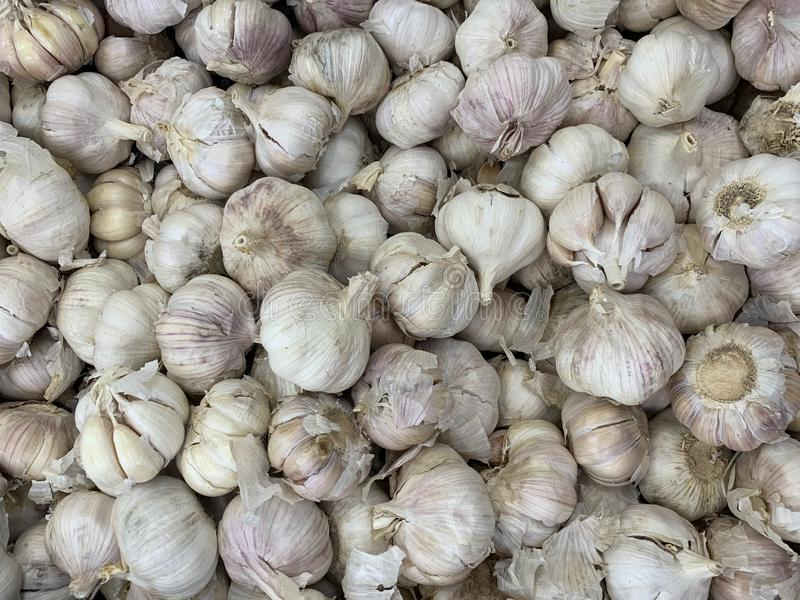 Struttura bianca del mucchio dell'aglio Aglio fresco sulla foto del primo piano della tavola del mercato fotografia stock