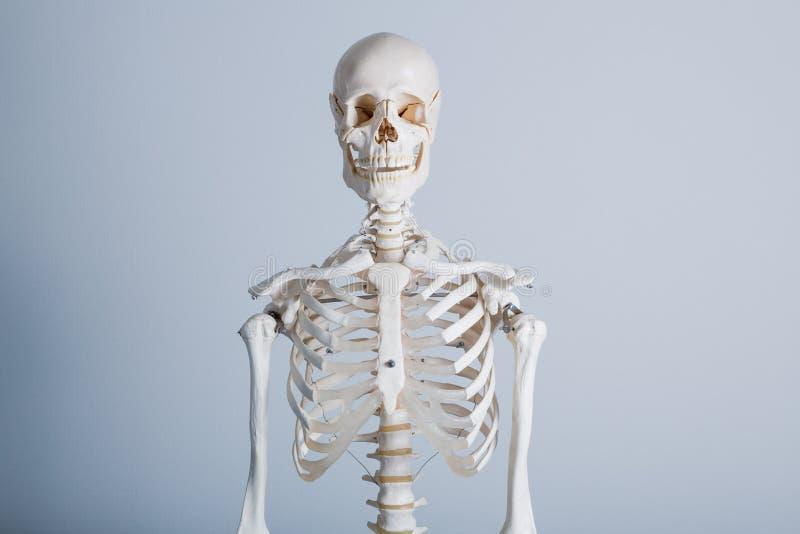 Struttura bianca dell'osso del corpo umano immagine stock libera da diritti