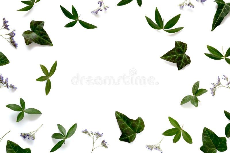 Struttura con le foglie verdi ed i fiori porpora immagine stock libera da diritti