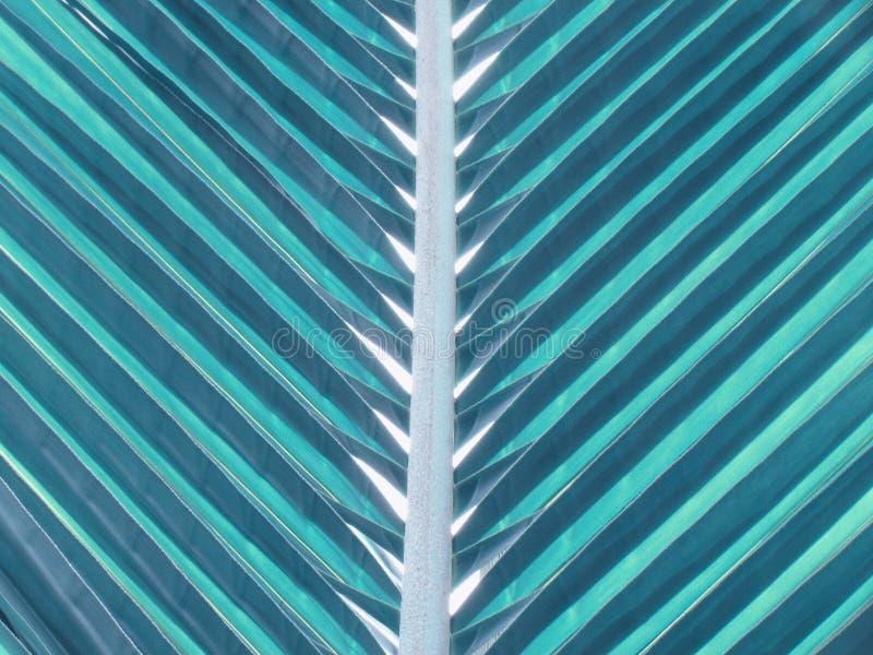 Struttura con luce ed ombra sulle foglie della noce di cocco nel tono d'annata di giorno fotografie stock libere da diritti