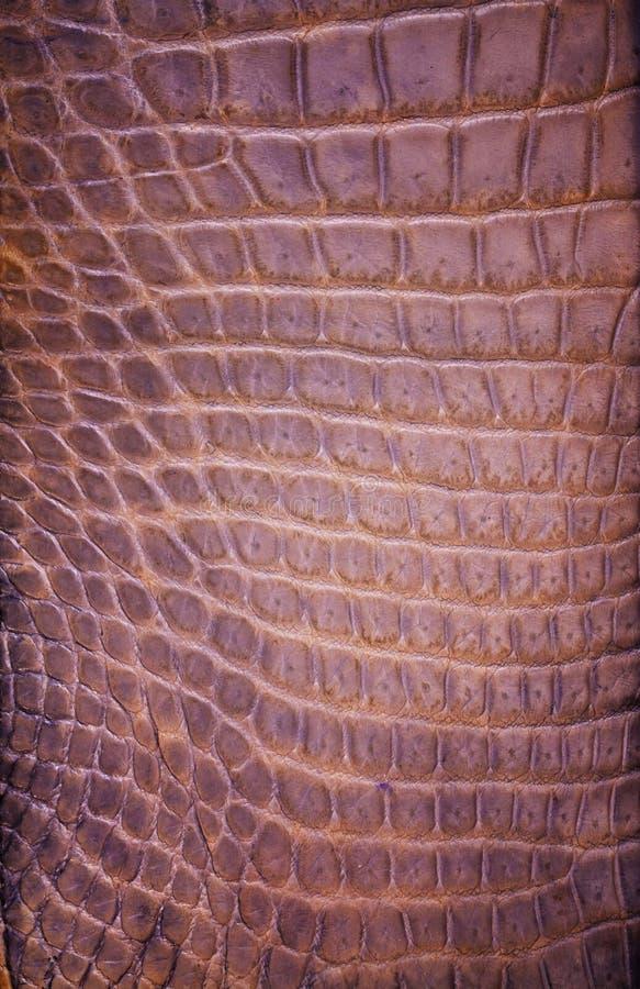 Struttura d'acqua dolce della pelle del coccodrillo immagine stock