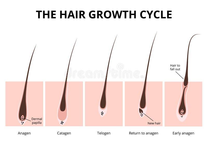 Struttura dei capelli illustrazione vettoriale