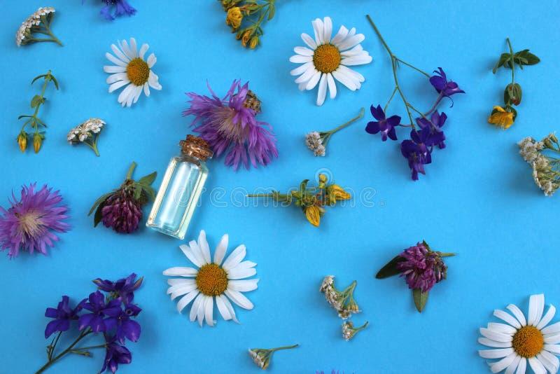 Struttura dei fiori selvaggi presentata su un fondo blu con una fiala di olio immagine stock