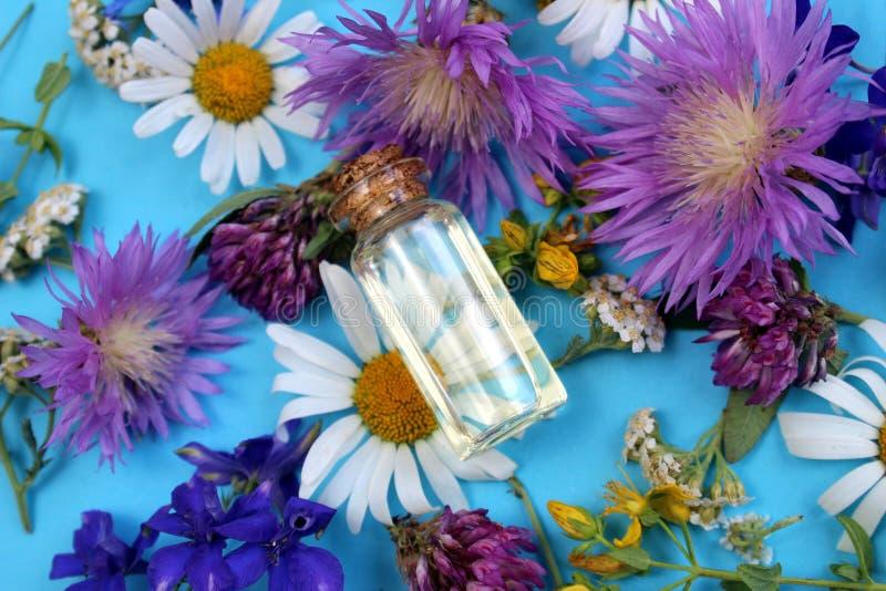Struttura dei fiori selvaggi presentata su un fondo blu con una fiala di olio immagine stock libera da diritti