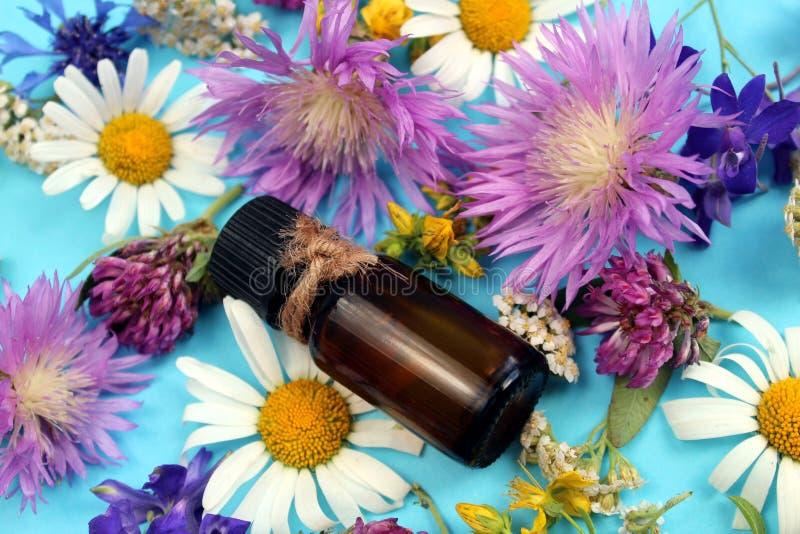 Struttura dei fiori selvaggi presentata su un fondo blu con una fiala di olio fotografie stock libere da diritti