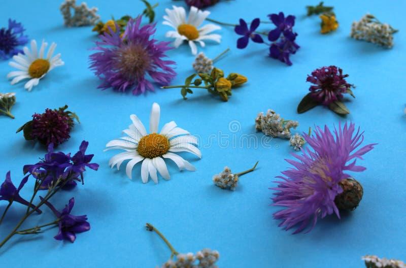 Struttura dei fiori selvaggi presentata sul fondo del cielo blu immagini stock libere da diritti