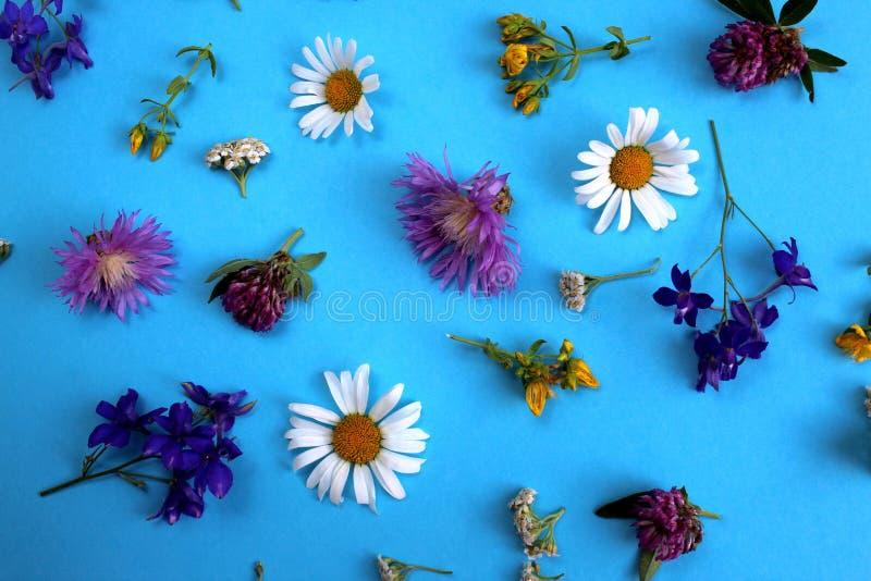 Struttura dei fiori selvaggi presentata sul fondo del cielo blu fotografia stock