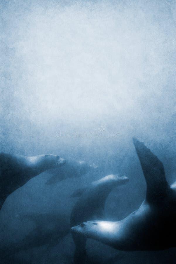 Struttura dei leoni di mare fotografie stock libere da diritti