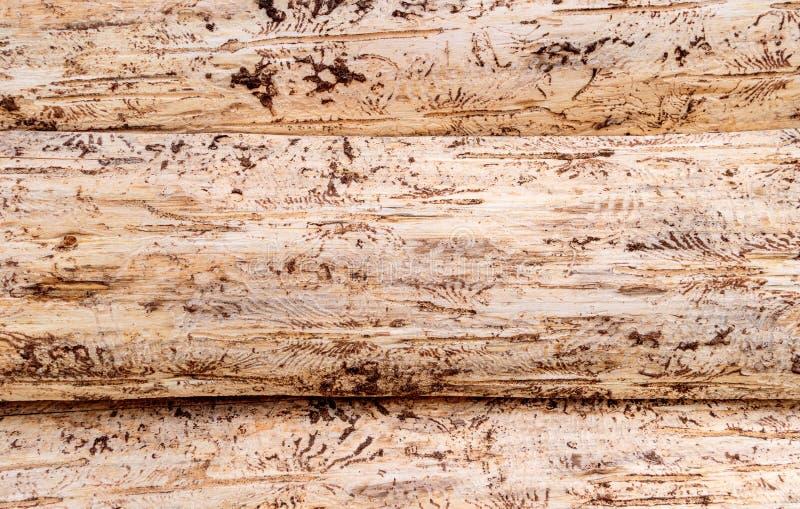 Struttura dei tronchi di albero sbucciati fotografie stock
