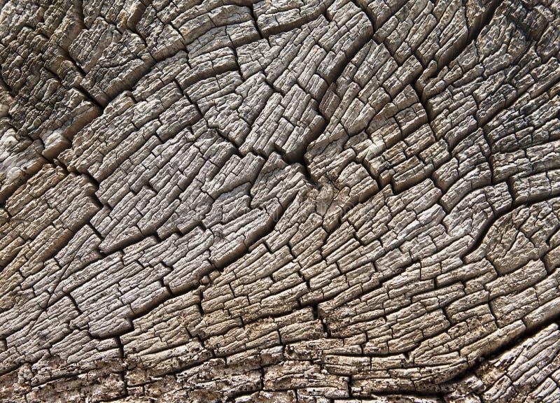 Struttura del ceppo del Driftwood immagini stock