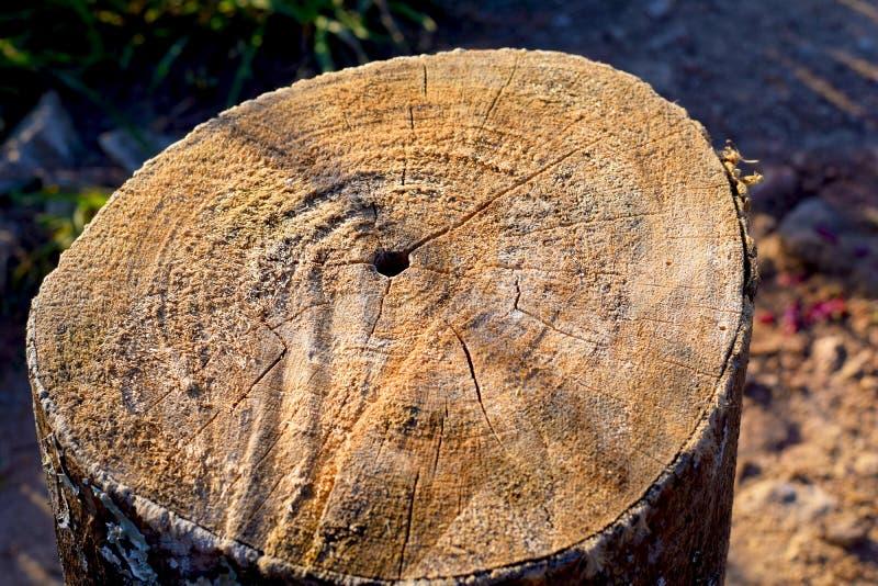 A struttura del ceppo di legno fotografia stock