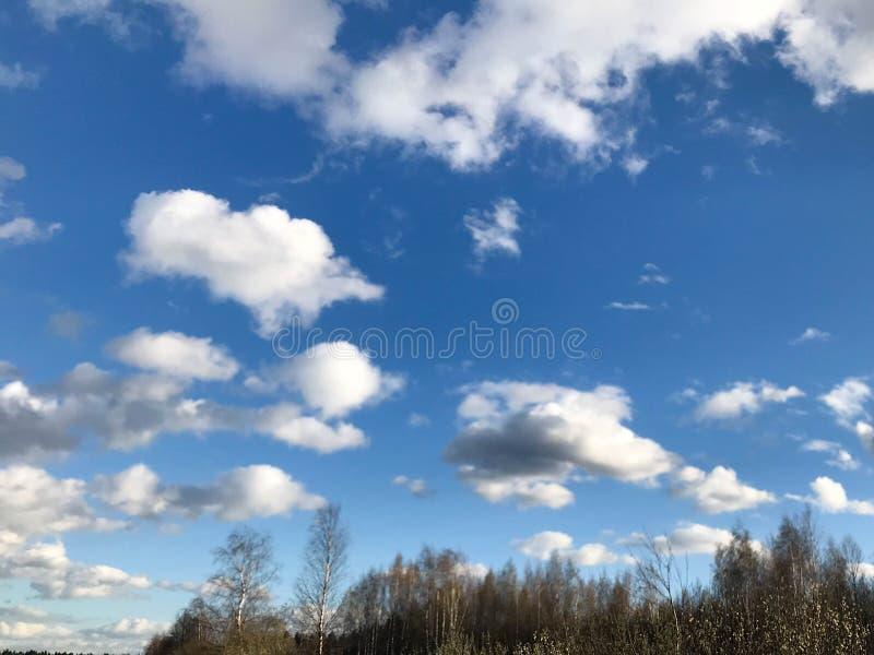 Struttura del cielo blu con le nuvole molli della pioggia pulita leggera lanuginosa aerata lanuginosa bianca contro lo sfondo di  immagini stock libere da diritti