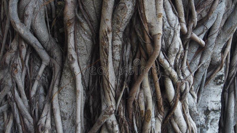 Struttura del circuito di collegamento di albero fotografie stock
