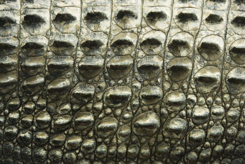 Struttura del coccodrillo. fotografia stock libera da diritti