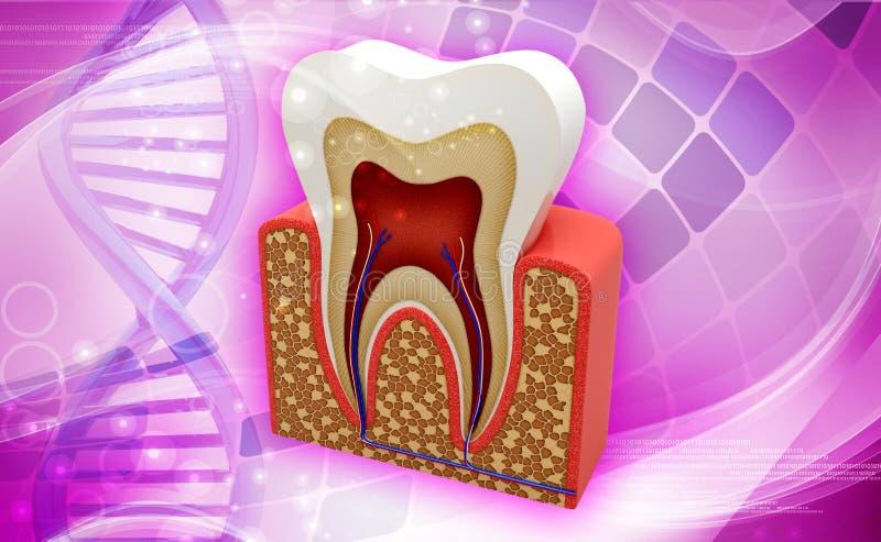 Struttura del dente royalty illustrazione gratis