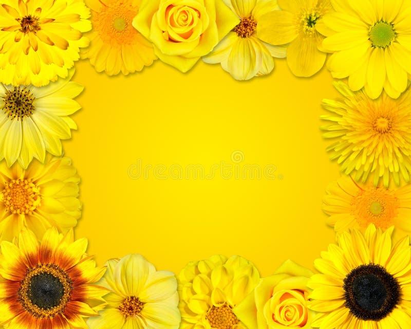 Struttura del fiore con i fiori gialli su fondo arancio royalty illustrazione gratis