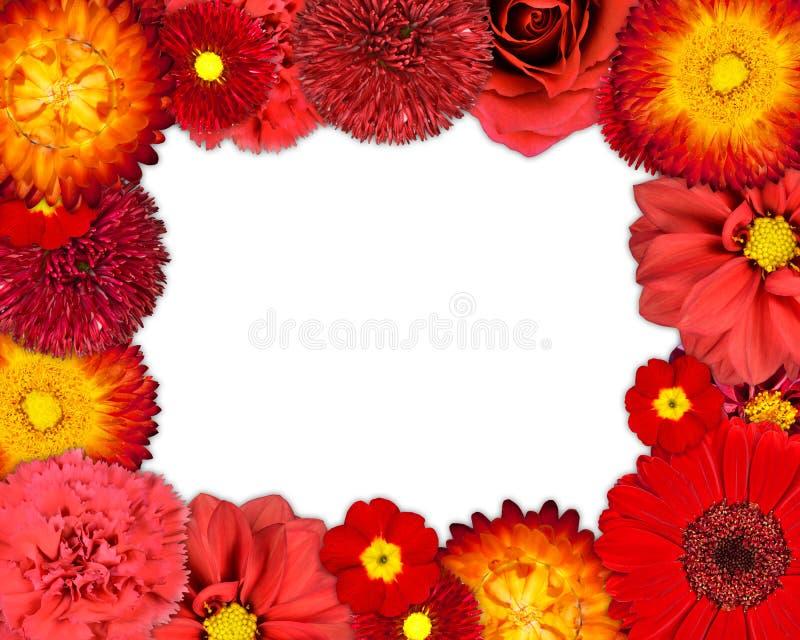 Struttura del fiore con i fiori rossi su fondo in bianco immagini stock libere da diritti