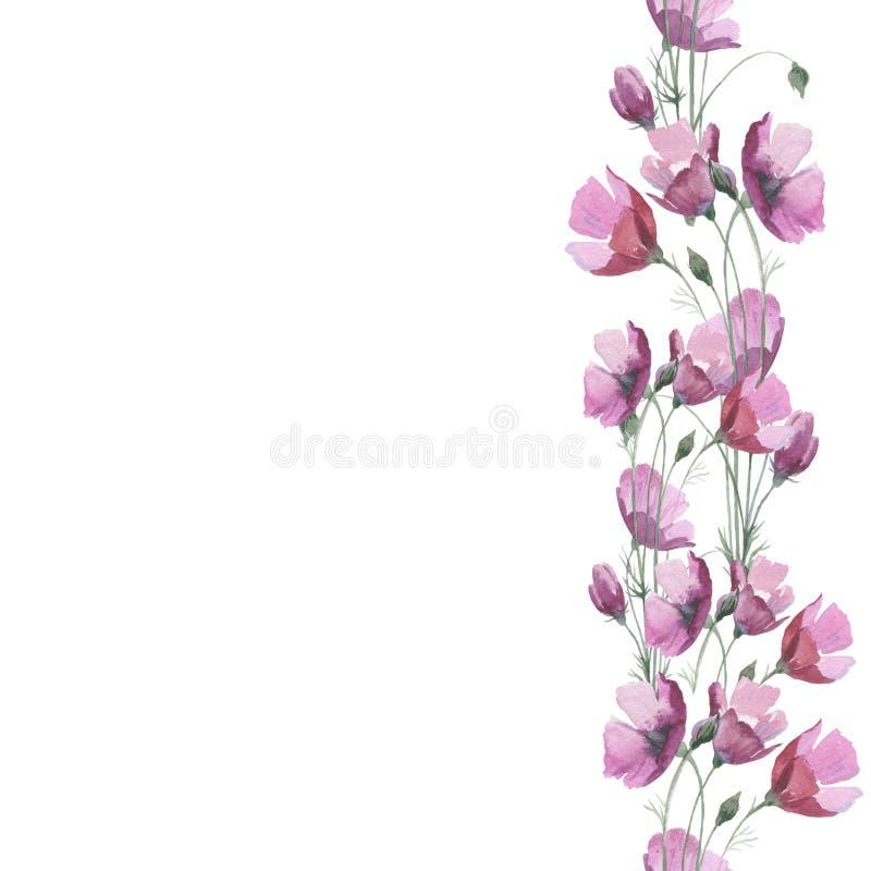 Struttura del fiore del papavero del Wildflower in uno stile dell'acquerello isolata royalty illustrazione gratis