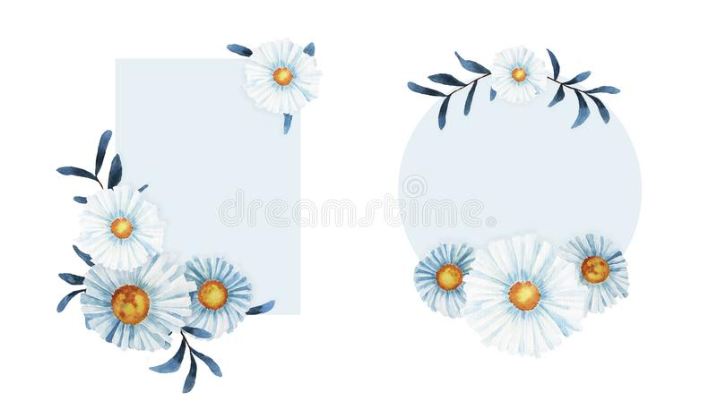 Struttura del fiore della camomilla del Wildflower in uno stile dell'acquerello isolata illustrazione vettoriale