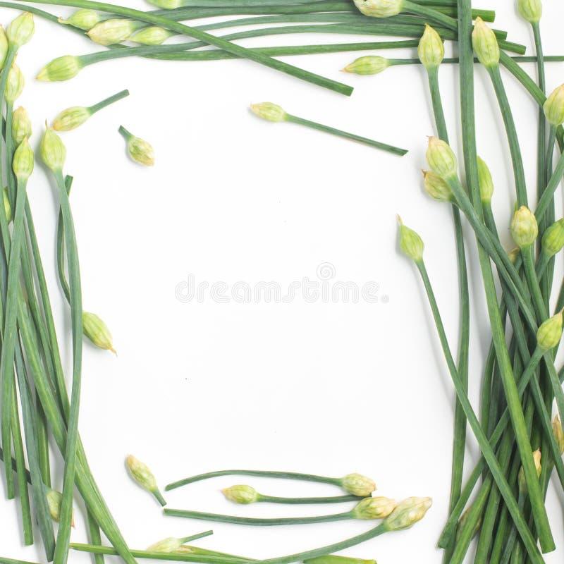 Struttura del fiore della erba cipollina di aglio fotografia stock