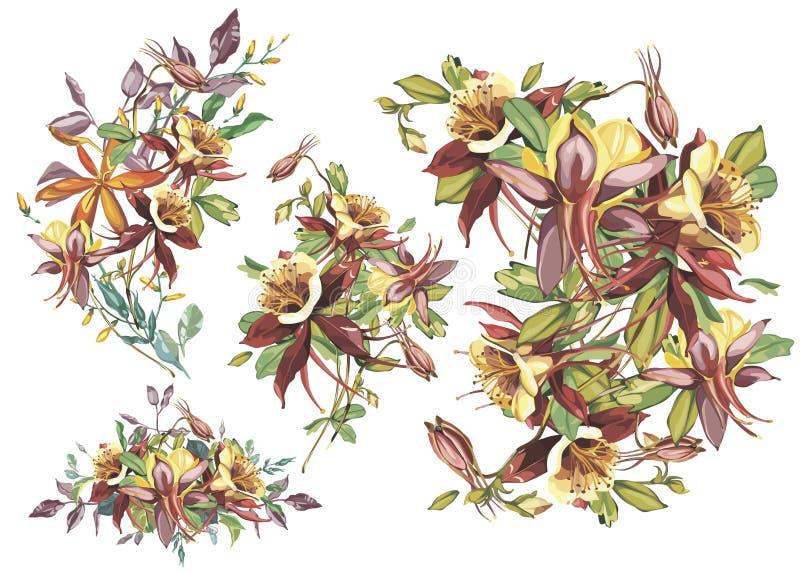 Struttura del fiore di estate in uno stile dell'acquerello isolata Nome completo della pianta: Crocosmia, Aquilegia Il fiore dell royalty illustrazione gratis