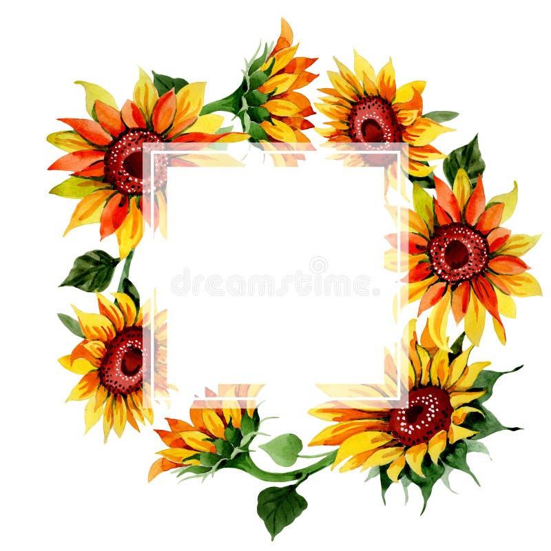 Struttura del fiore del girasole del Wildflower in uno stile dell'acquerello illustrazione di stock
