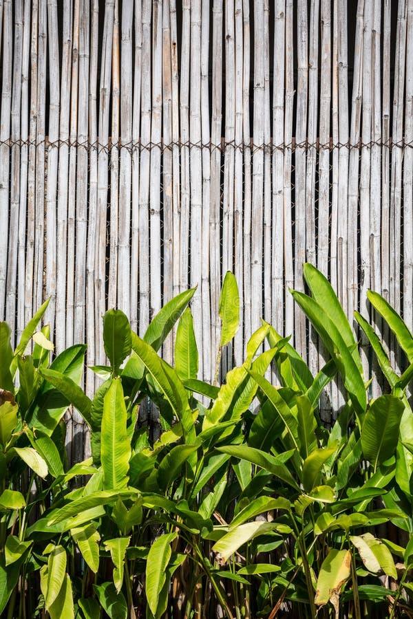 Struttura del fondo bella con bambù e la foglia fotografie stock libere da diritti