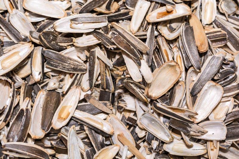 Struttura del fondo del primo piano dei semi di girasole della buccia fotografie stock libere da diritti
