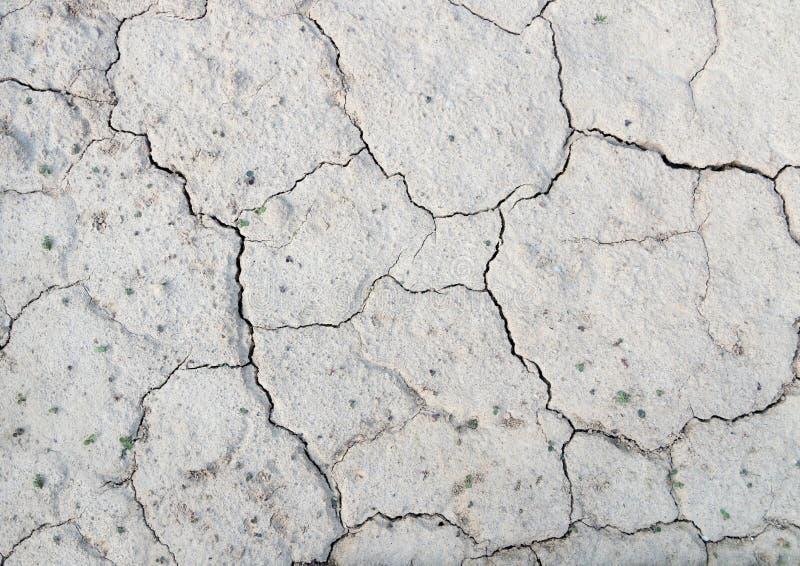 Struttura del fondo di una terra incrinata inaridita con la piccola pianta fotografia stock libera da diritti