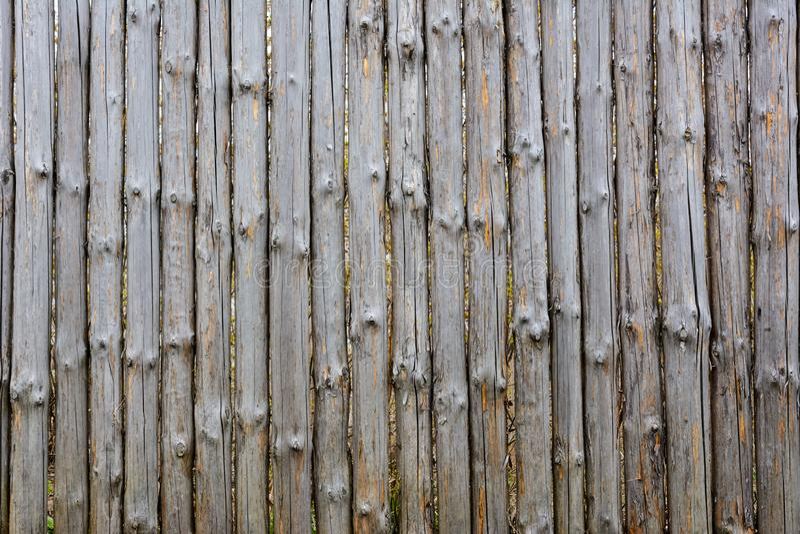 Struttura del fondo di vecchio recinto di legno grigio dagli interi ceppi con i nodi Recinto misero fotografia stock libera da diritti