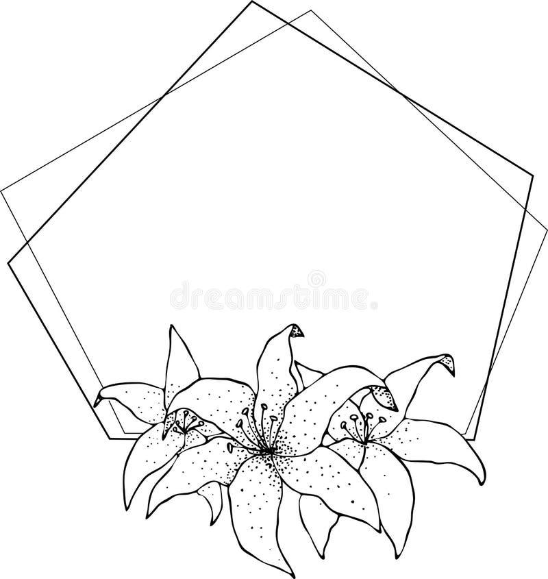 Struttura del giglio, disegno dei fiori e schizzo con linea-arte sugli ambiti di provenienza bianchi illustrazione di stock