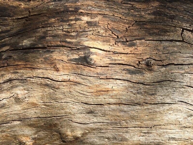 Struttura 04 del legname immagine stock