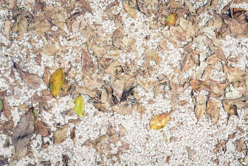 Struttura del pavimento del marciapiede con le foglie gialle in autunno, fondo di caduta fotografie stock
