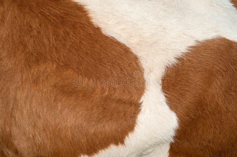 Struttura del pellame della mucca fotografia stock