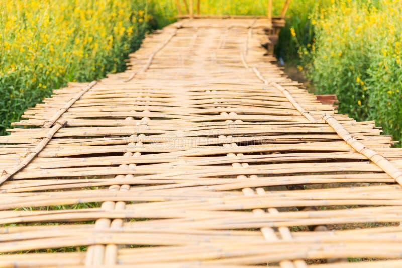 Struttura del ponte di bambù di modo della passeggiata del tessuto con il campo giallo della canapa delle indie dei fiori di crot fotografia stock