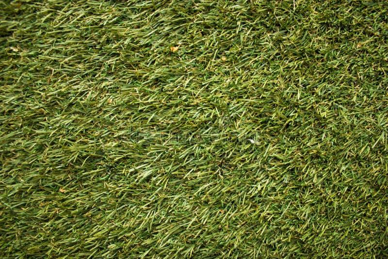 Struttura del prato inglese di calcio, campo da golf, prato inglese sistemato, erba ben curato verde immagini stock