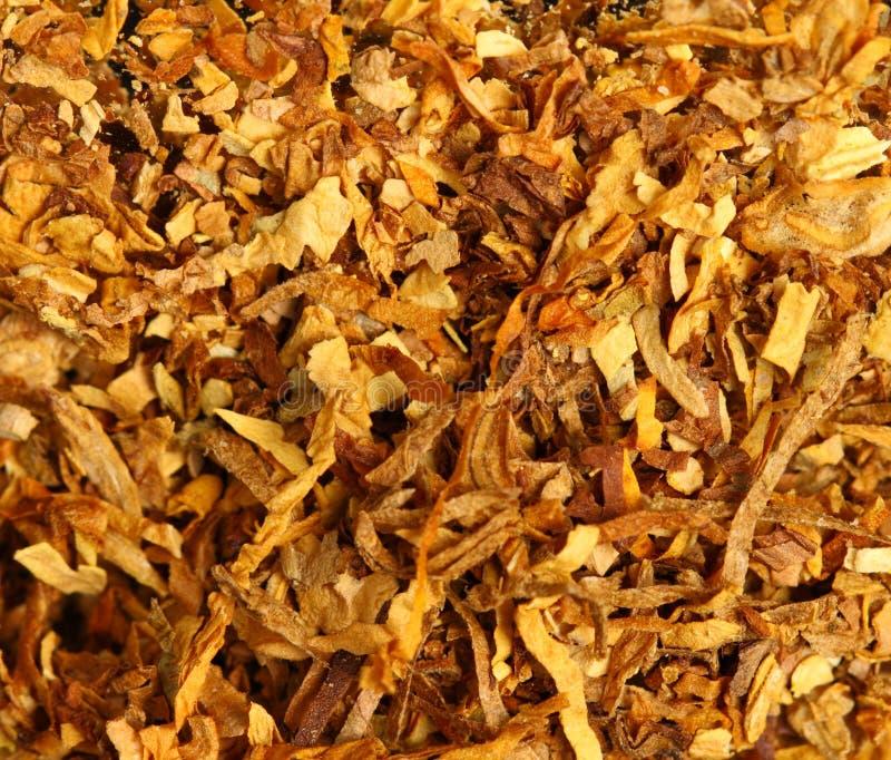 Struttura del tabacco fotografie stock libere da diritti