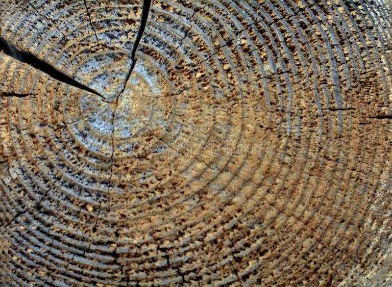 Struttura del taglio di legno fotografia stock