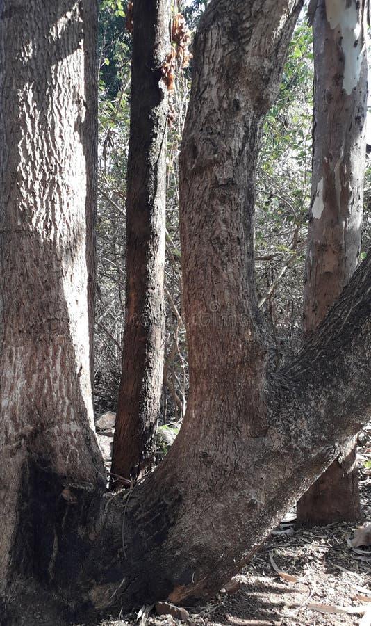Struttura del tronco di albero fotografia stock