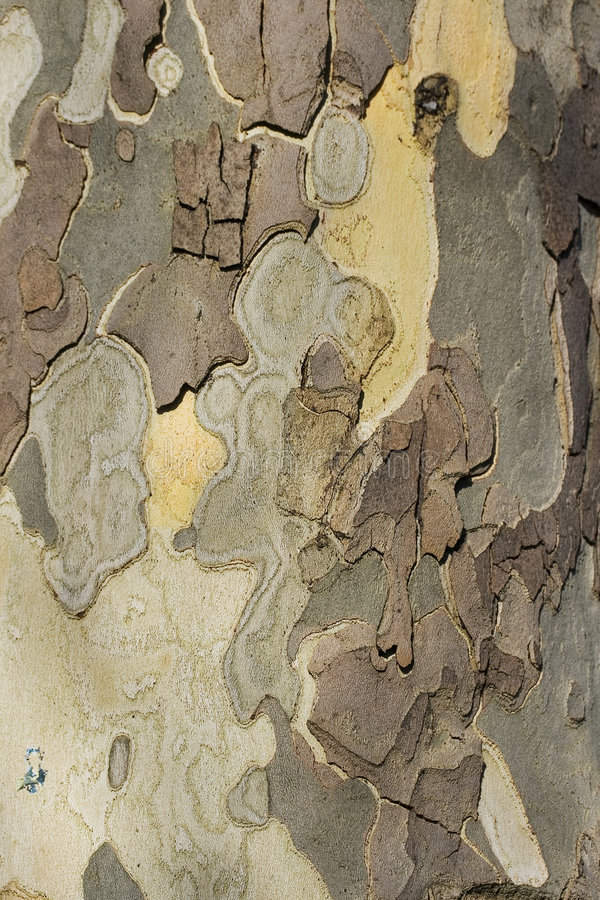 Struttura dell'albero fotografia stock libera da diritti