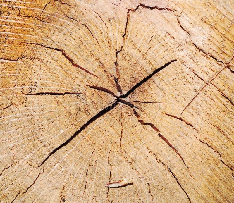 Struttura dell'albero del cerchio immagini stock libere da diritti