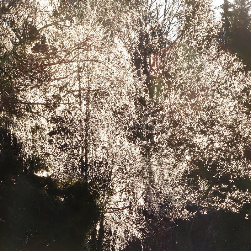 Struttura dell'albero della lampadina immagini stock