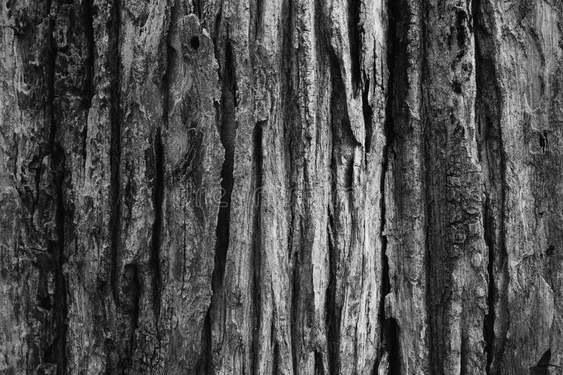 Struttura dell'albero di corteccia fotografia stock libera da diritti
