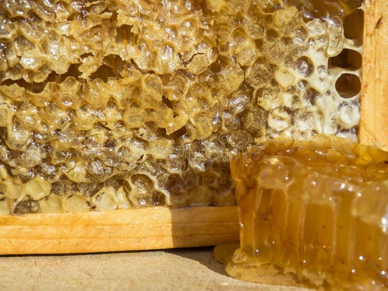 Struttura dell'ape con miele immagini stock