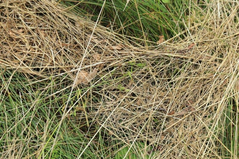 Struttura dell'erba - fondo fotografia stock