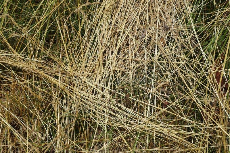 Struttura dell'erba - fondo fotografie stock