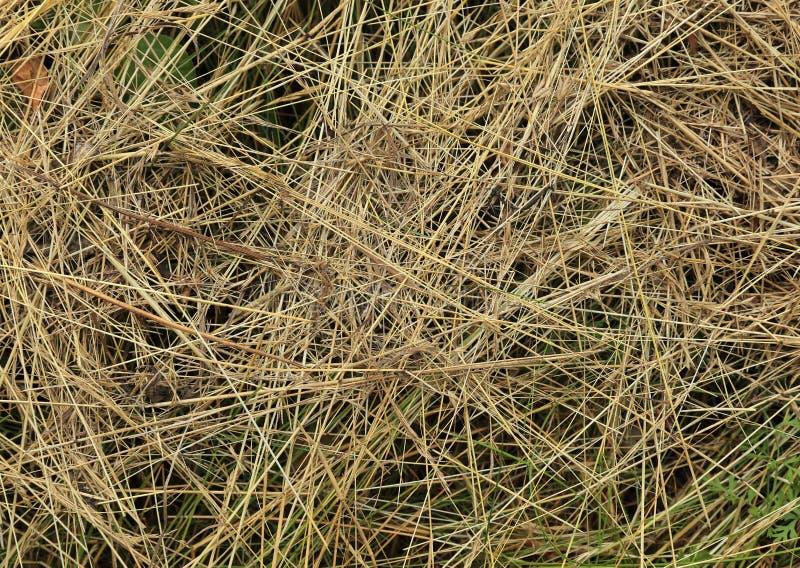 Struttura dell'erba - fondo immagini stock