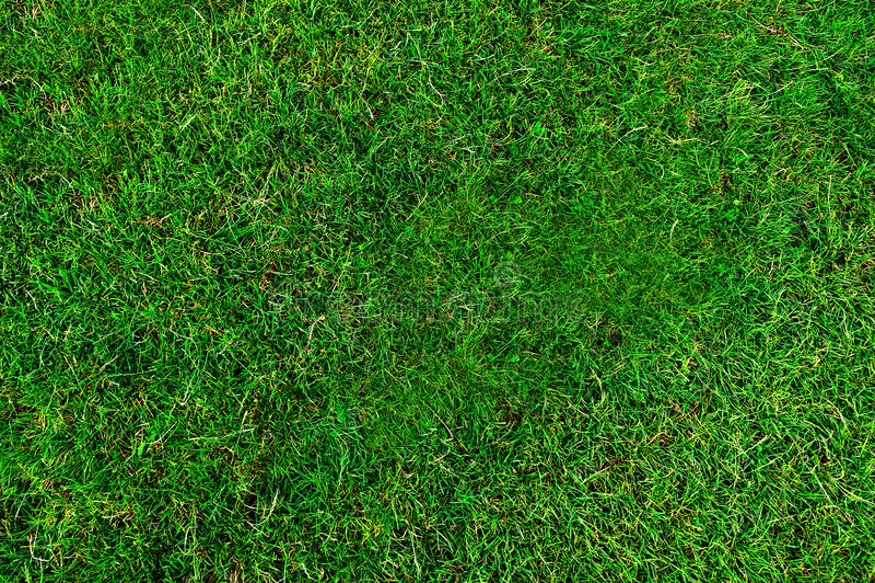 Struttura dell'erba verde immagine stock