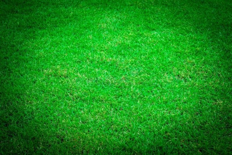 Struttura dell'erba verde fotografia stock