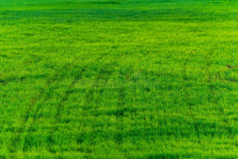 Struttura dell'erba verde da un campo fotografia stock